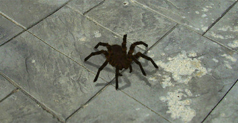 Scary-Spider